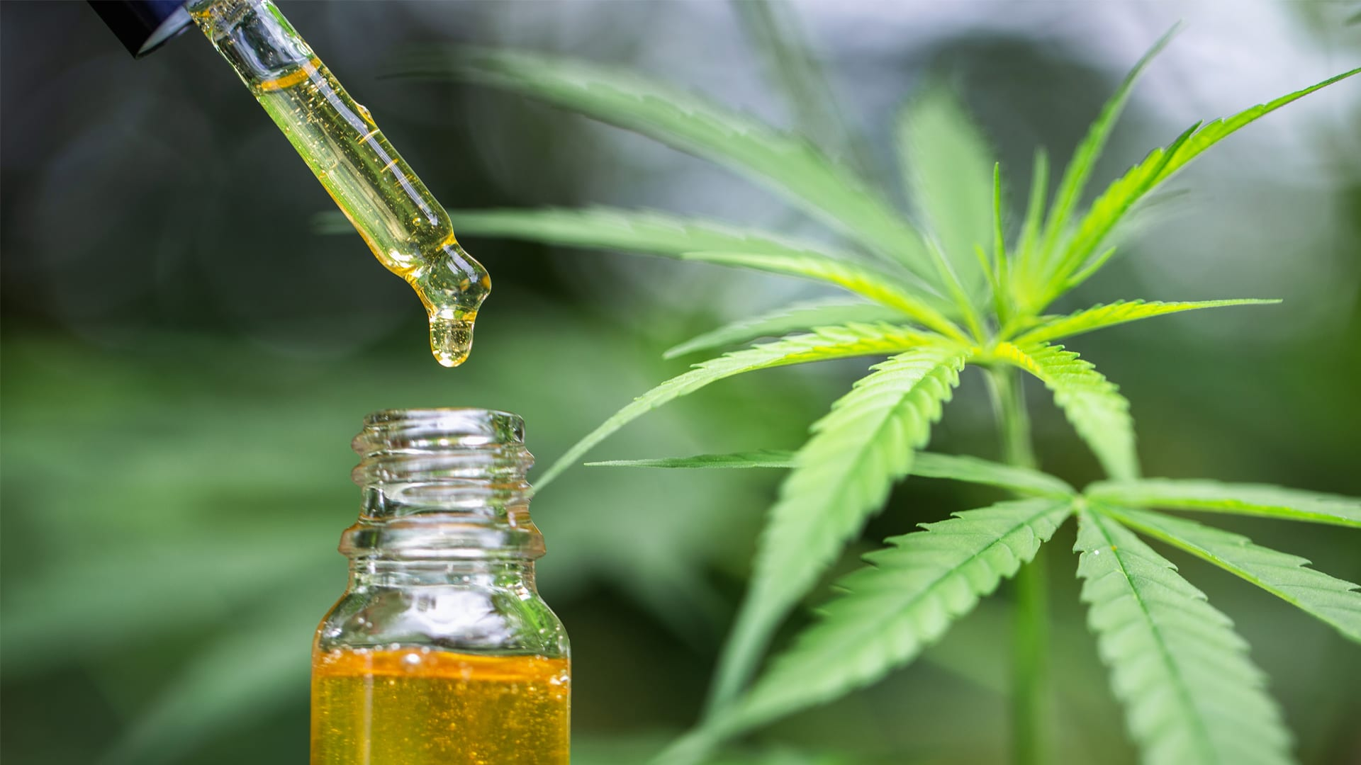Six Tricks Concerning Cbd Oil Uk Next Day Delivery